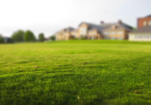 Tuin- en terreinonderhoud
